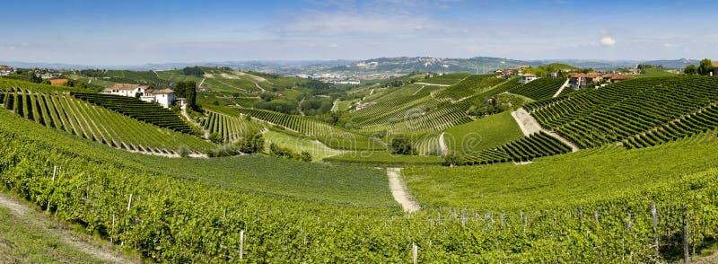Panoramiczny widok langhe winnica fotografia royalty free