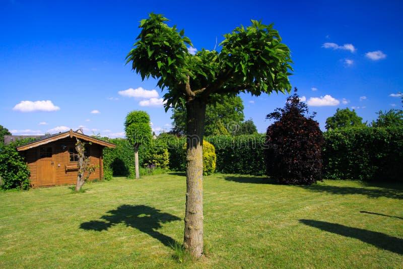 Panoramiczny widok na niemiec ogródzie z zielonym gazonem, płaskim drzewem, bukowym żywopłotem i starą drewnianą budą przeciw nie zdjęcie royalty free