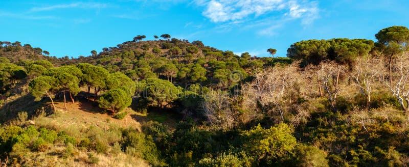 Panoramiczny widok nad Montes de Malaga fotografia royalty free