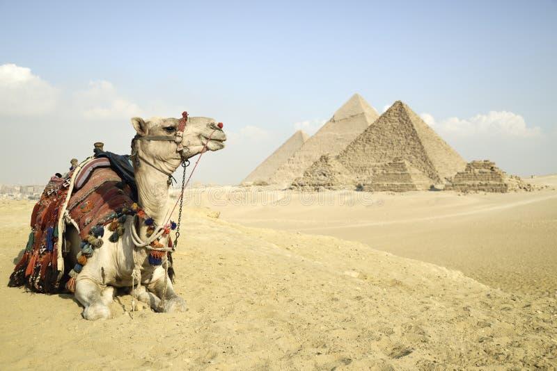 Panoramiczny widok ostrosłupy Od Giza plateau, Kair, Egipt zdjęcie royalty free