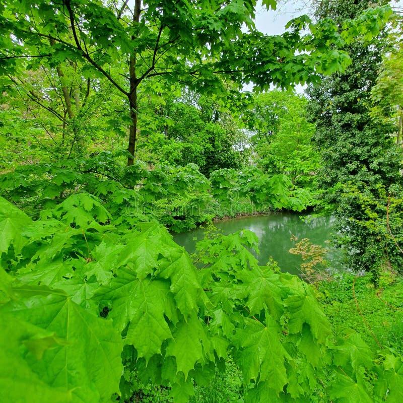 Panoramiczny widok pi?kna sceneria w Alps z jasnym jeziorem, zielona ??ka, kwitnie kwiaty, fotografia royalty free