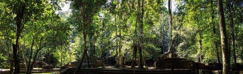 Panoramiczny widok połówki wykopywać ruiny, Palenque, Chiapas obraz stock