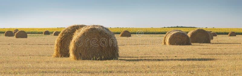 Panoramiczny widok pole z pszeniczną słomą, siano belami i niebem, rur obraz stock