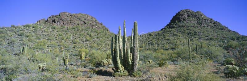 Panoramiczny widok wiosna w Picachio szczytu stanu parka północy Tucson, Arizona zdjęcie royalty free