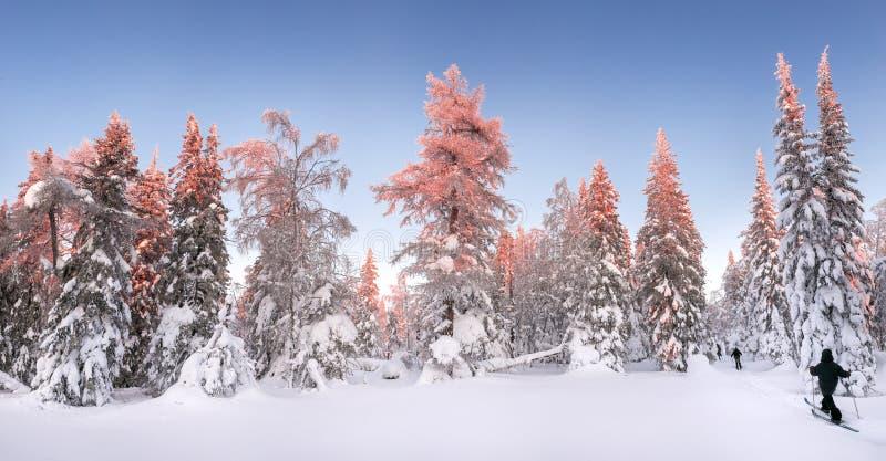Panoramiczny widok zmierzch w śnieżnym lesie z narciarkami i turystami na narta bieg, obraz stock