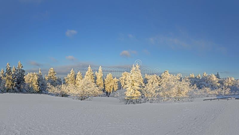 Panoramiczny zima krajobraz przy Feldberg obrazy royalty free