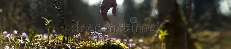 Panoramisch beeld van mooie aard met mannelijke hand die aan a richten stock afbeeldingen