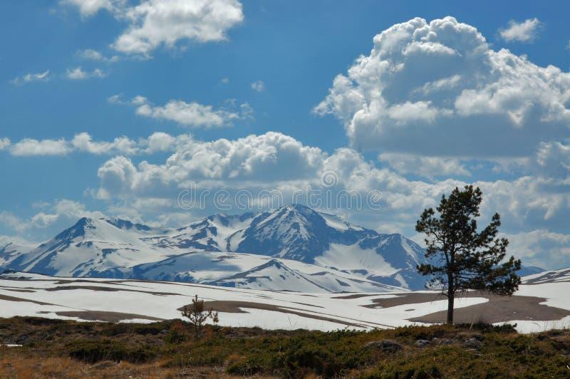 Panoramisch berglandschap met boom stock foto's