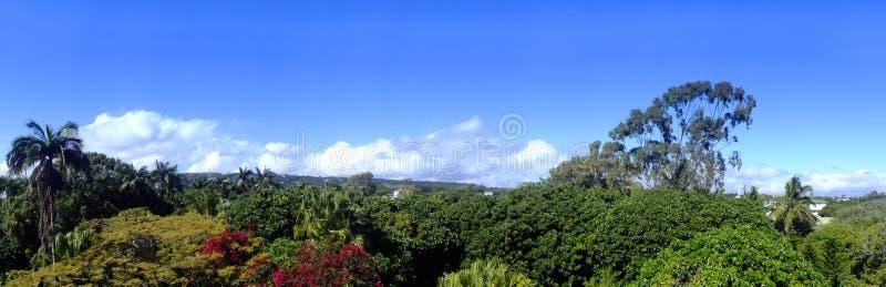 Panoramisch landschap in Mauriitus stock foto