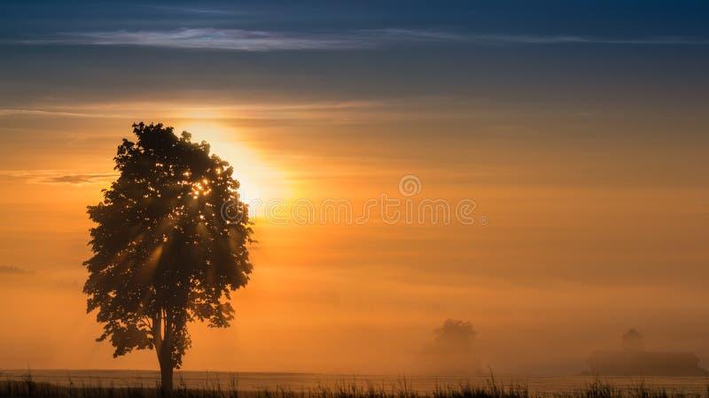 Panoramisch ochtendlandschap van zonsopgang over mistige weide royalty-vrije stock fotografie