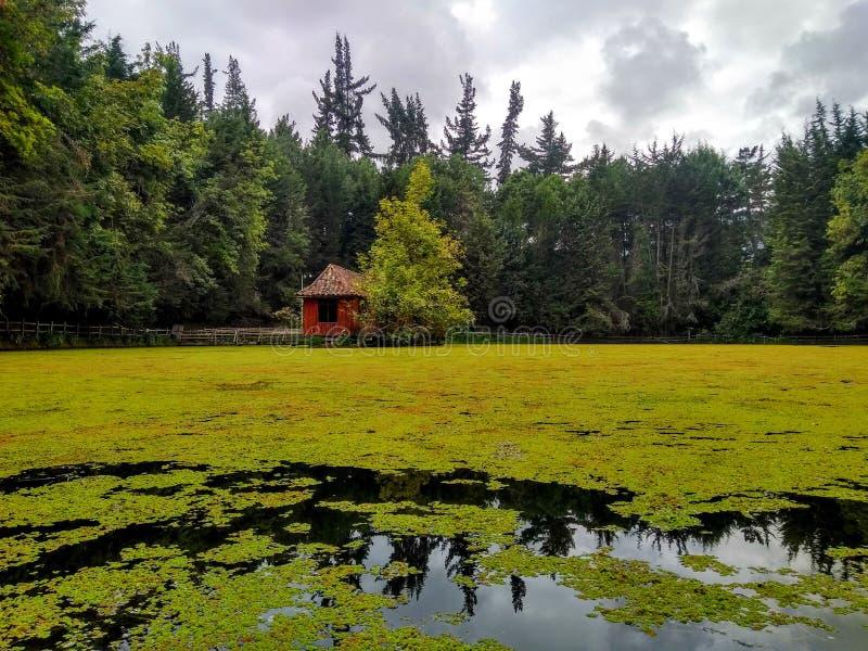 Panoramisch vom schönen und kleinen See lizenzfreies stockbild