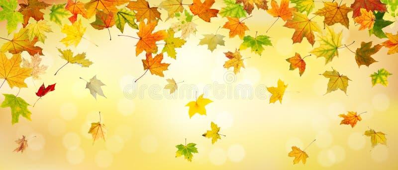Panoramische de herfstachtergrond stock illustratie