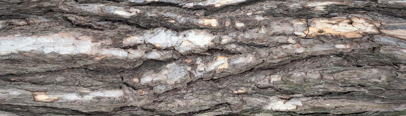 Panoramische foto van hulptextuur van de schors van pijnboom royalty-vrije stock foto