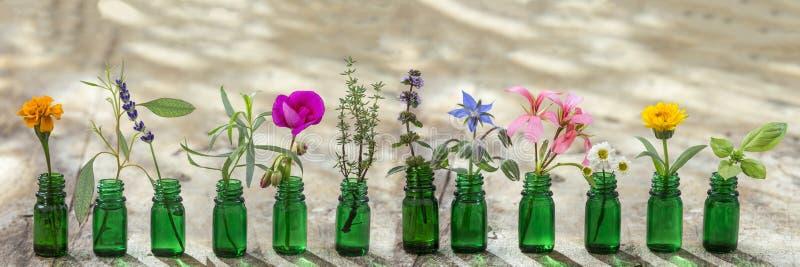 Panoramische groene etherische oliefles, en bloemenkorenbloem, geranium, lavendel, munt, orego, rozemarijn, goudsbloem, thyme, ba stock afbeeldingen
