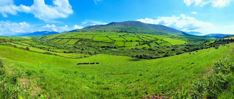 Panoramische groene gebieden in het platteland van Ierland Dingle Schiereiland, Provincie Kerry royalty-vrije stock fotografie