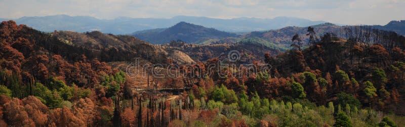 Panoramische Landschaft stockbilder