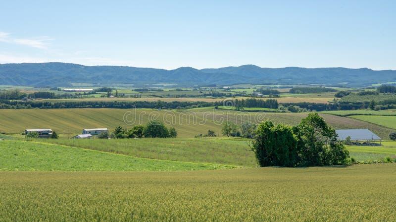 Panoramische Landschaft des grünen Reisbauernhofes und des langen Berg-scape lizenzfreie stockfotografie