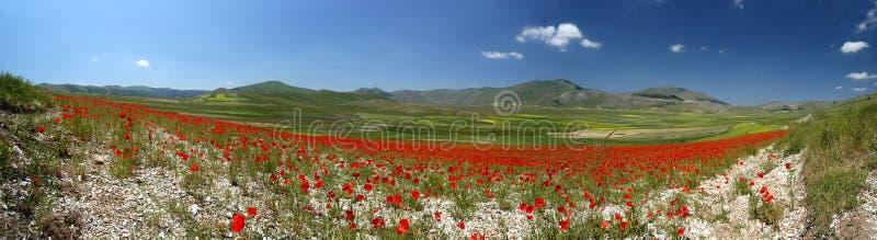 Panoramische Landschaft mit Mohnblumen lizenzfreie stockfotos