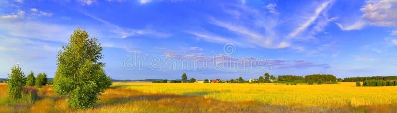 Panoramische landwirtschaftliche Landschaft mit Birke stockbild