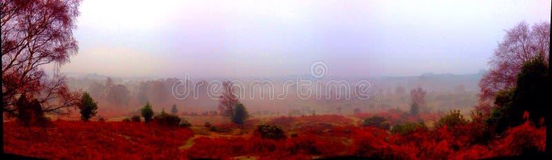 Panoramische neue Waldherbstfarben lizenzfreies stockfoto