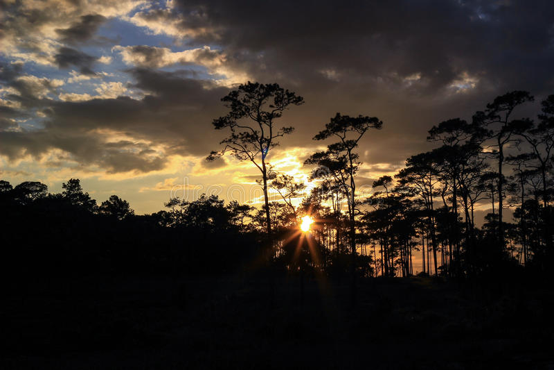 Panoramische Szene von Bäumen mit Sonnenunterganghintergrund stockfotografie