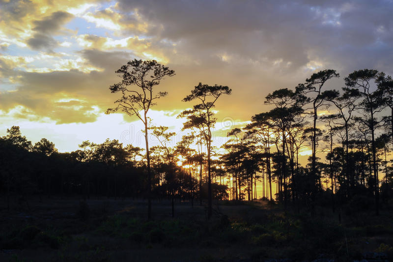 Panoramische Szene von Bäumen mit Sonnenunterganghintergrund lizenzfreies stockfoto