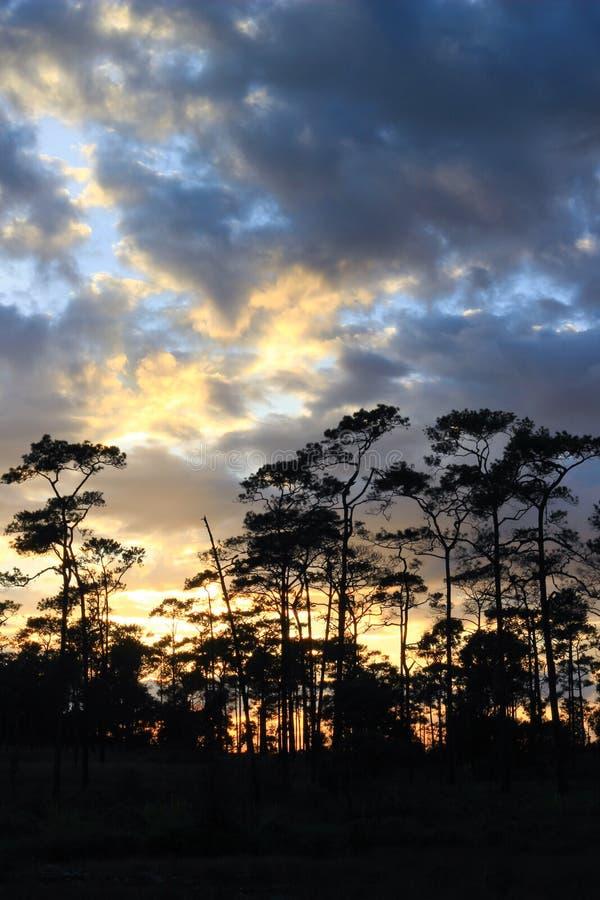 Panoramische Szene von Bäumen mit Sonnenunterganghintergrund stockfoto