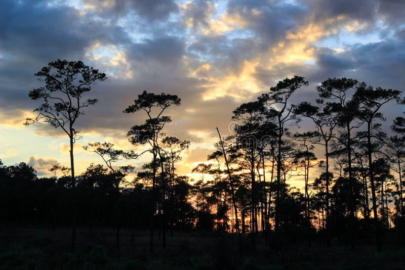 Panoramische Szene von Bäumen mit Sonnenunterganghintergrund lizenzfreie stockfotos