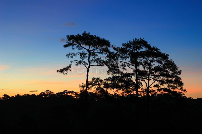 Panoramische Szene von Bäumen mit Sonnenunterganghintergrund stockbilder