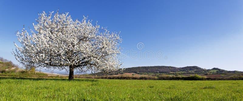 Panoramischer Frühling stockbild