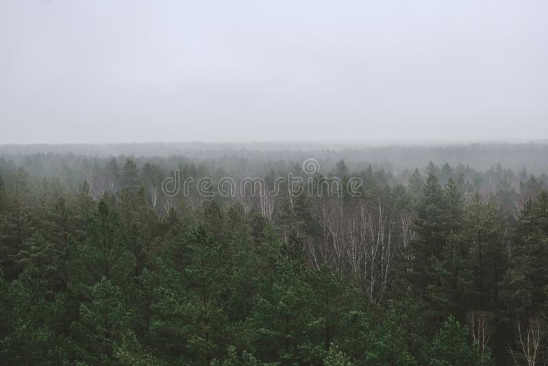 Panoramisk skog på morgonen, med lång horisont i berget Spruce-topp i dimma på hösten arkivbild
