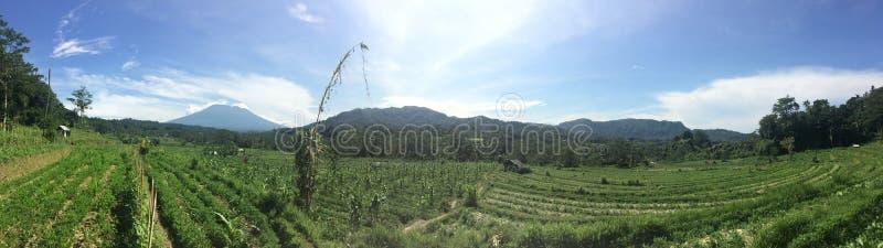 Panoramiska vyer av odlade gröna fält, djungel och berg Indonesien, Bali royaltyfri bild