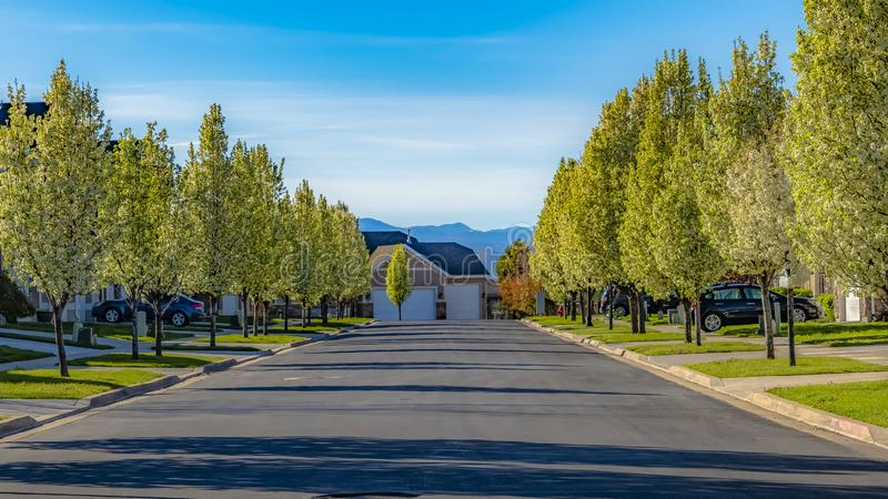 Panoramy ramowa droga wykładał z domami i białymi kwiatonośnymi drzewami na pogodnym wiosna dniu fotografia royalty free