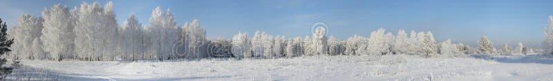 panoramy zima drewno zdjęcie royalty free