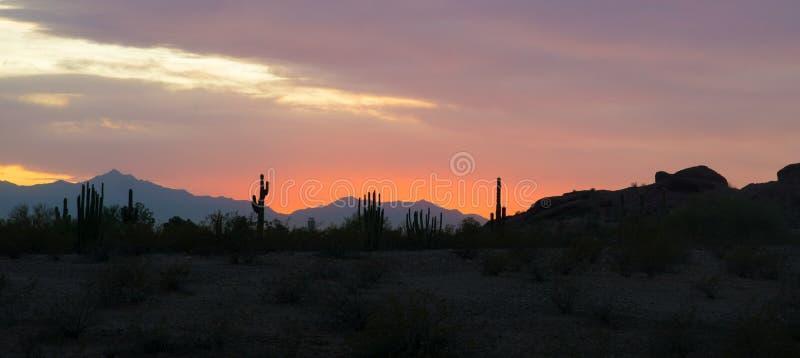 Panorma仙人掌sillhuette视图在日落的在亚利桑那phoneix沙漠 图库摄影