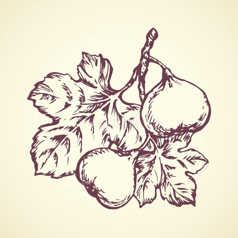 Panpipe предпосылка рисуя флористический вектор травы иллюстрация штока