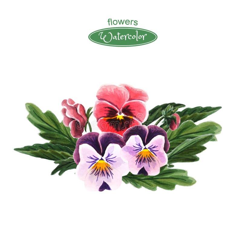 Pansies изолированные на белой предпосылке Букет красного, пинка и пурпурных цветков иллюстрация вектора