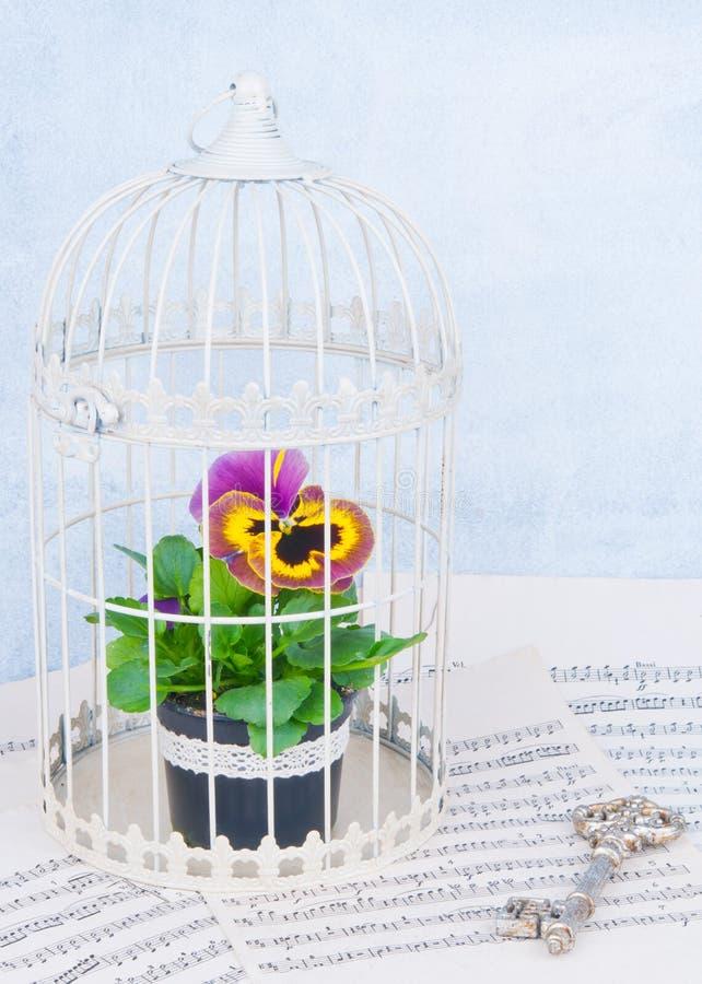 Flor na gaiola imagens de stock royalty free