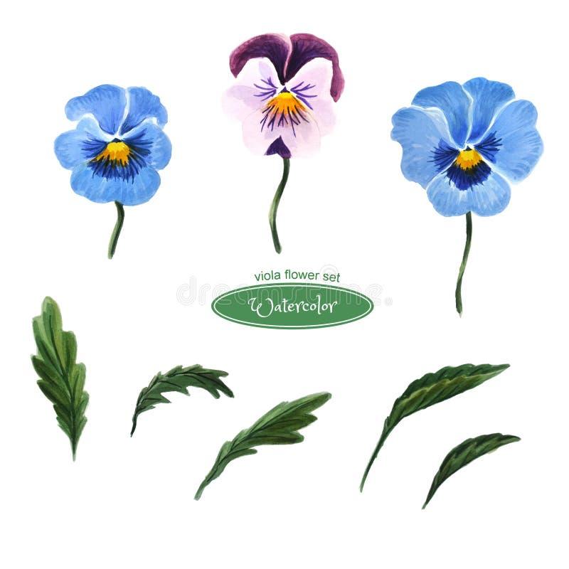 Pansies blåa blommahuvud, sidor, knoppar bakgrund isolerad white royaltyfri illustrationer