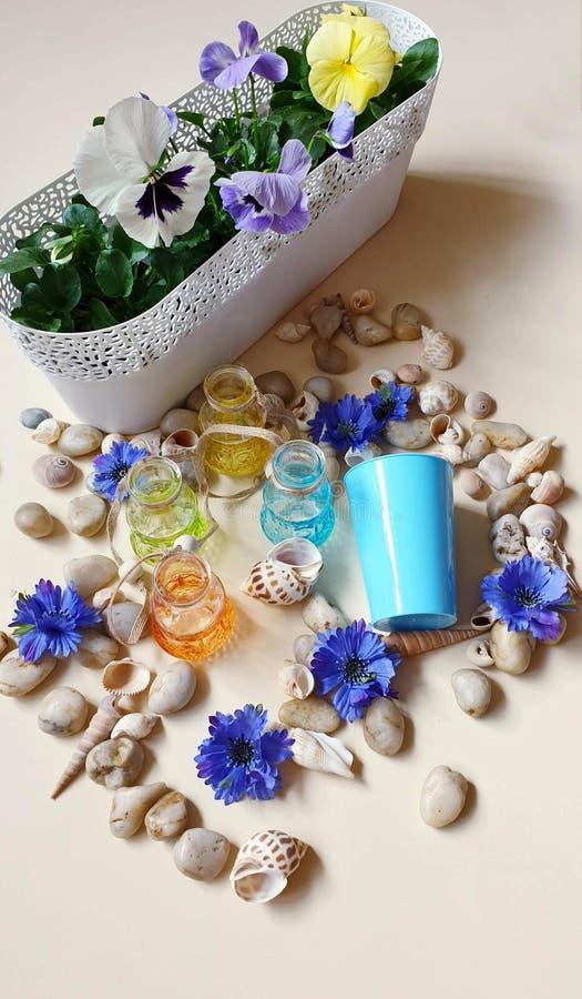 Pansies das flores de flor do potenci?metro das flores dos escudos do mar das pedras da ?gua de vidro das garrafas em uma praia s imagens de stock