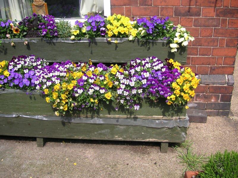 Pansies in den Blumenkästen lizenzfreies stockfoto