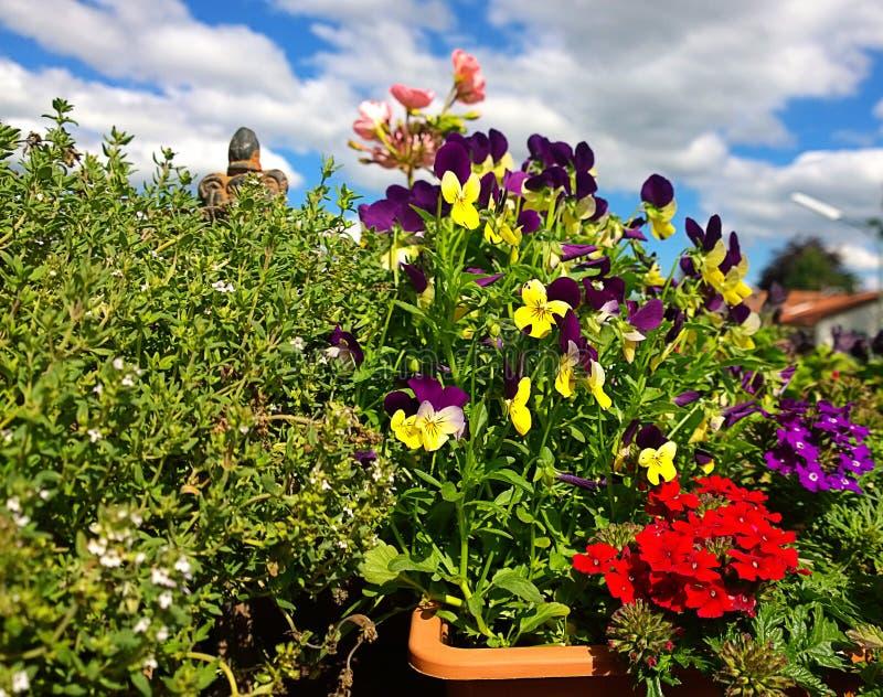 Pansies en kleurrijke de lentebloemen op het balkon royalty-vrije stock foto's
