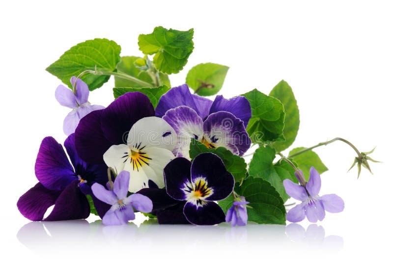 Pansies en viooltjes royalty-vrije stock afbeeldingen