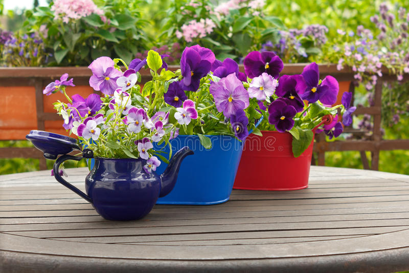 Pansies flowers viola pots background royalty free stock photography