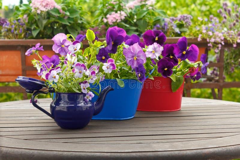 Pansies kwiatów altówka puszkuje tło fotografia royalty free