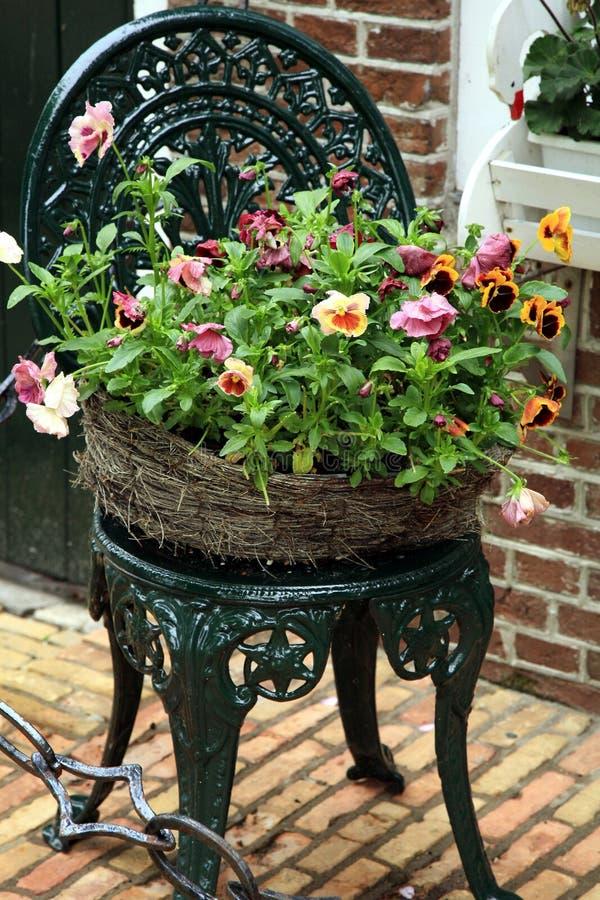Free Pansies - Spring Flowers Stock Photos - 4493003