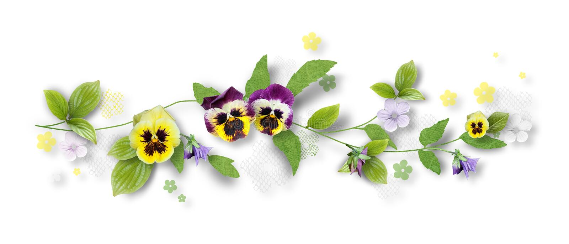 pansy цветков состава декоративный стоковое изображение