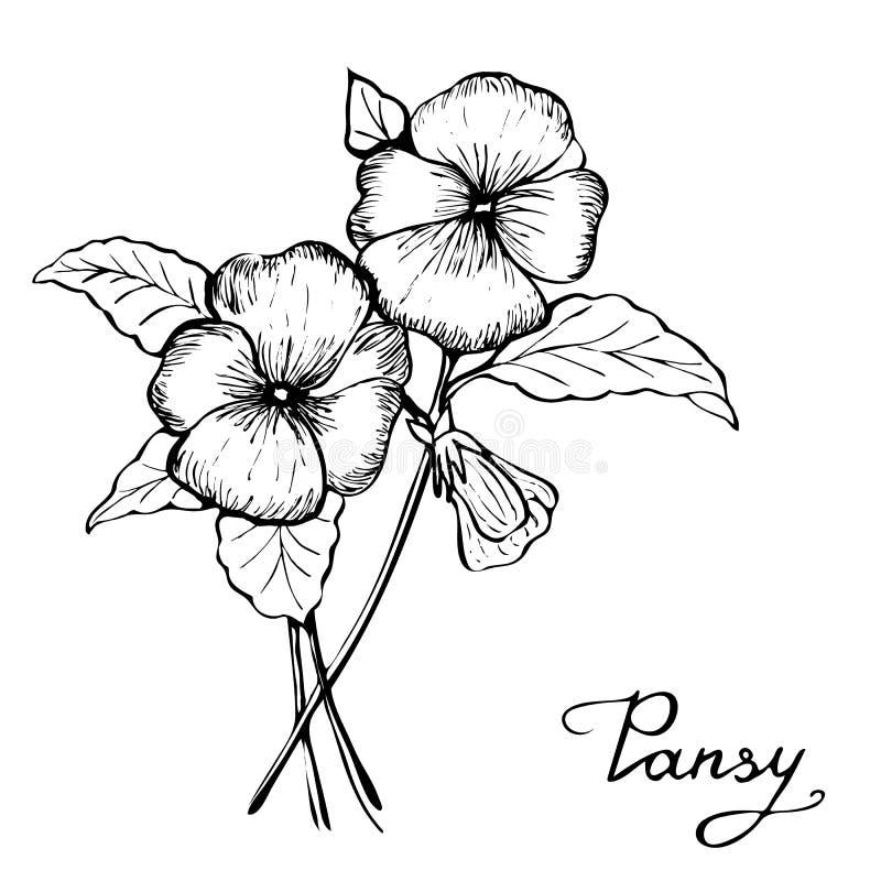 Pansy Flower Clip Art