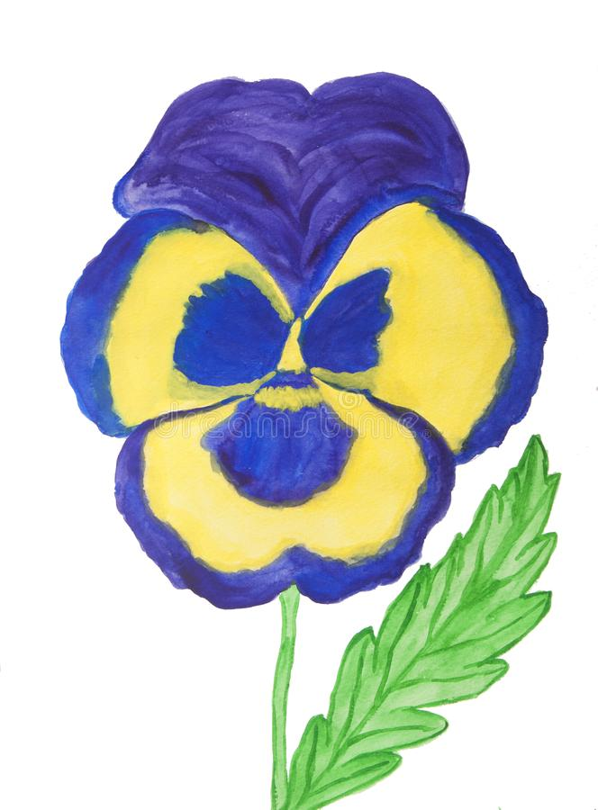 Pansy of dark blue and yellow colours royalty free stock photo
