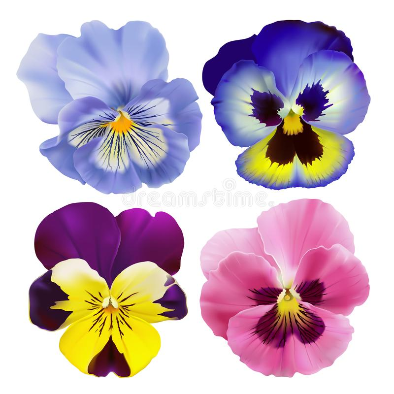 Pansy Flowers libre illustration